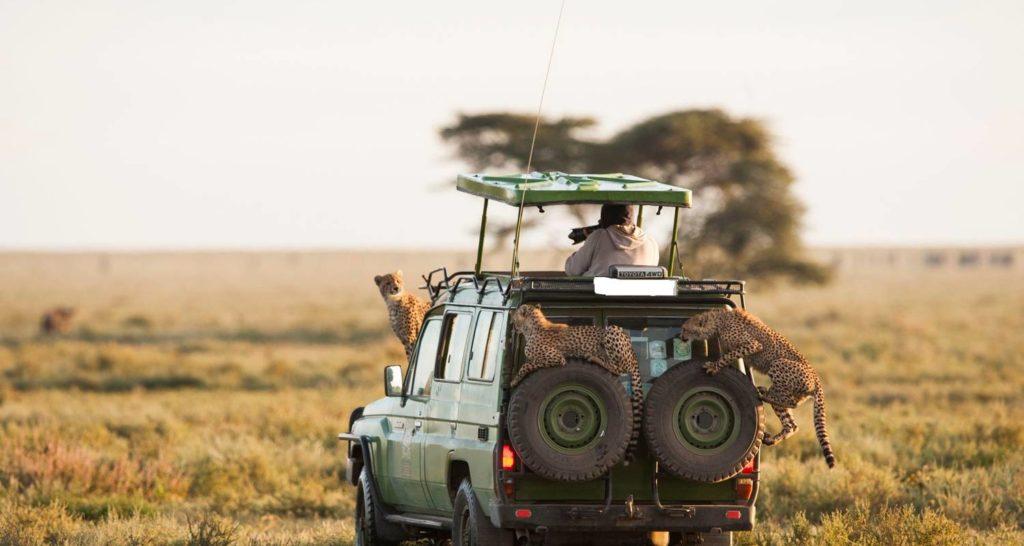 wild safari uganda